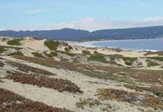 coastal habitat, CA, USA