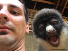 SOK with Diana monkey in Ankasa Conservation Area, Ghana.