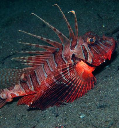 Image attribution vertebrate zoology for Sjfc fish r net