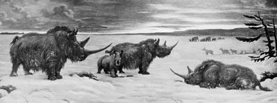 Rhinocerotidae Perissodactyl