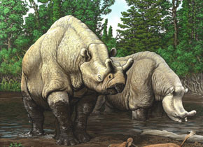 Brontotheriidae | Perissodactyl